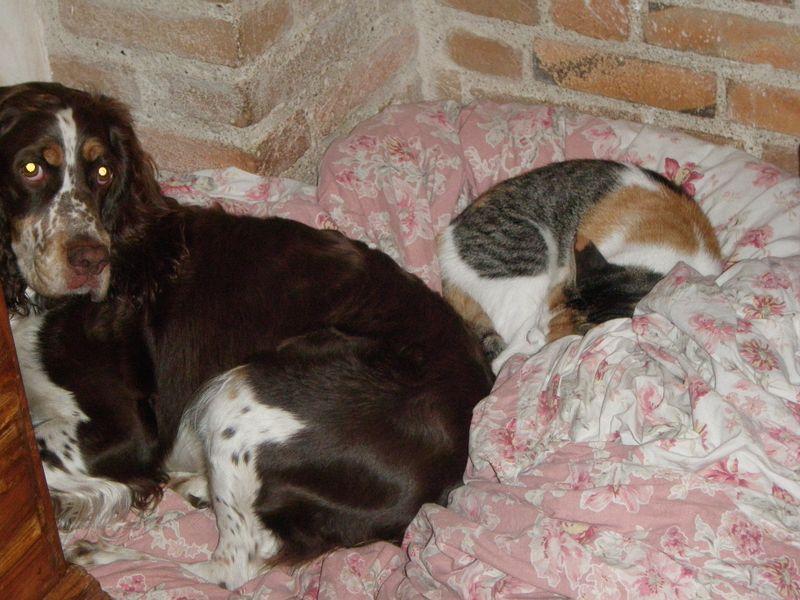 Hunting oct 18 2009 311