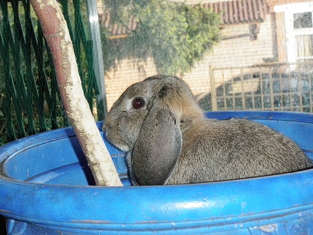 Photo bunny